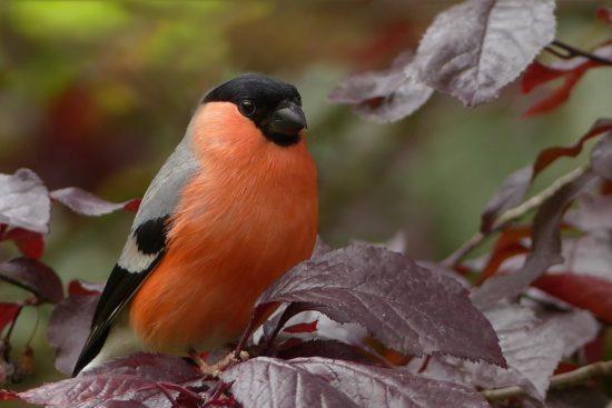 Nueva App 'Guía de las aves e itinerarios ornitológicos de España'