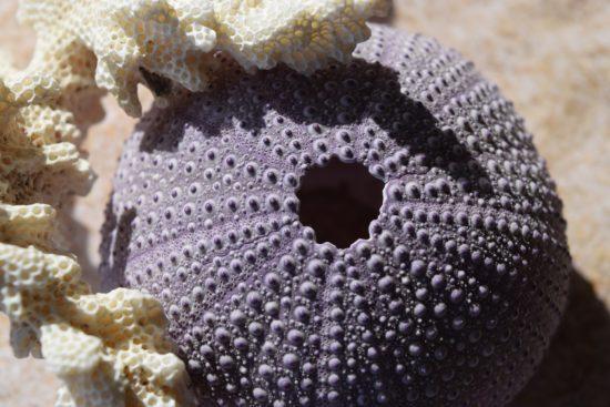 Arrecifes de coral en peligro de extinción