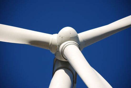 Cádiz detiene molinos eólicos para salvar al buitre